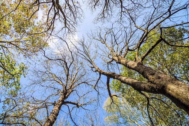 Błękitne niebo z bezlistnymi drzewami, 13 listopada 2019 r