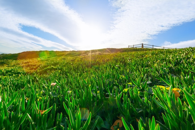 Błękitne niebo z chmurami i promieniami słońca, które świecą na zielonej trawie wzgórz