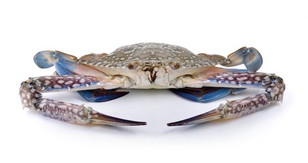 Błękitni pływaccy kraby na biel ścianie