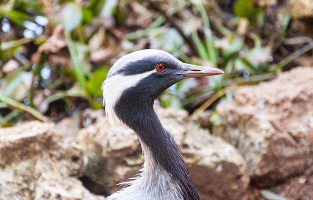 Błękitny afrykański ptasi zakończenie