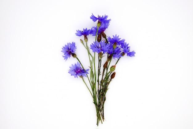 Błękitny chabrowy ziele lub kawalera guzika kwiatu bukiet odizolowywający