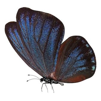Błękitny motyl z nogami i antenami na białym tle
