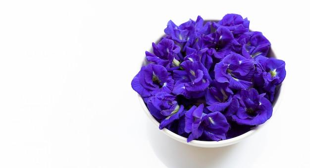 Błękitny motyliego grochu kwiat na białym tle.
