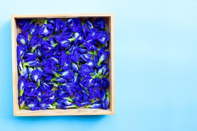 Błękitny motyliego grochu kwiat na tle.