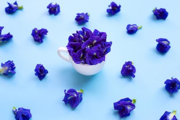 Błękitny motyliego grochu kwiat z filiżanką na błękitnym tle.