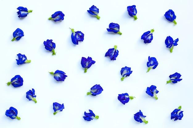 Błękitny motyliego grochu kwiatu kwitnienie na bielu ,.