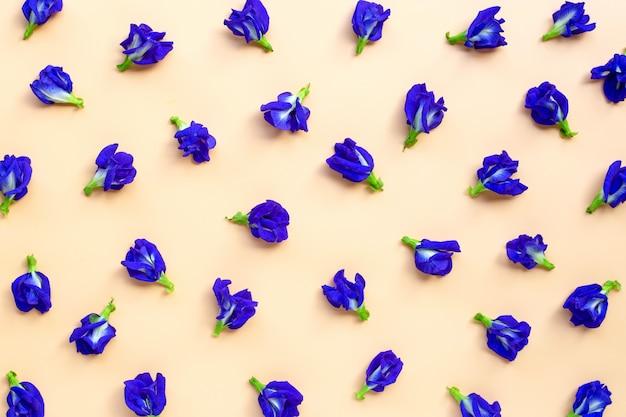 Błękitny motyliego grochu kwiatu kwitnienie na żółtym tle ,.