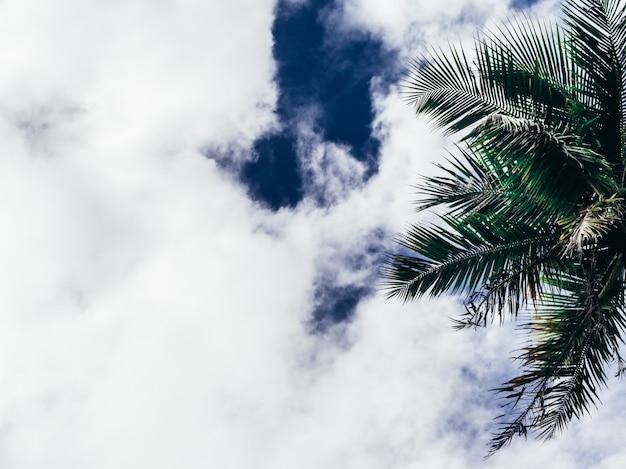 Błękitny palmowy tło