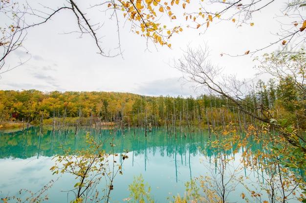 Błękitny staw (aoiike) w biei, hokkaido jesień
