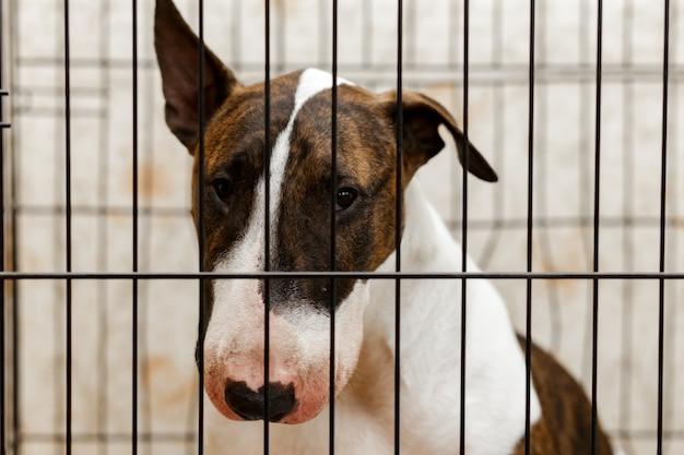 Bliska bezdomny pies patrząc przez kraty w schronisku dla zwierząt.