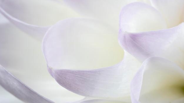Bliska białe i fioletowe płatki