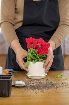 Bliska ceramiczna doniczka z czerwonymi kwitnącymi petuniami na drewnianym stole