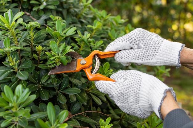 Bliska cięcia liści roślin