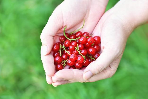 Bliska kobiecej ręki trzymającej dojrzałej czerwonej porzeczki w kształcie serca.