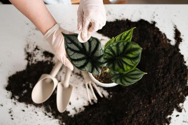 Bliska kobieta uprawy roślin