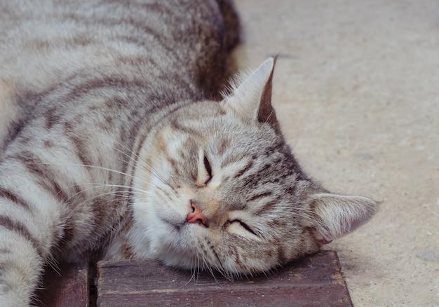 Bliska ładny pręgowany kot spać na podłodze z drewna i cementu