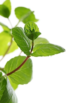 Bliska liści mięty