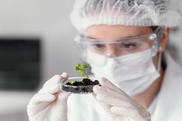 Bliska naukowiec oglądając roślinę