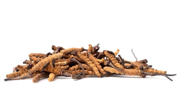Bliska ophiocordyceps sinensis lub cordycep grzybowy to zioła.