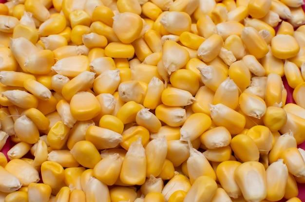 Bliska, pchnięcie kukurydzy cukrowej na tle