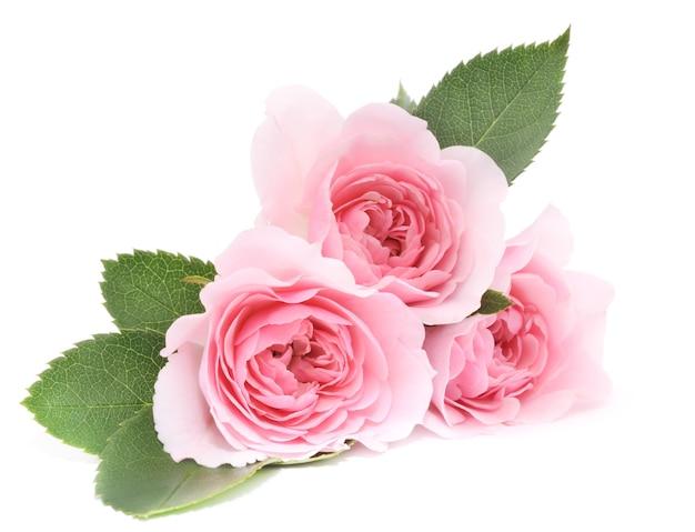 Bliska piękne różowe róże z liśćmi