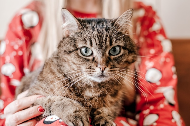 Bliska portret pasiasty ciemny kot leżący na kobiecych rękach