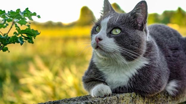 Bliska portret słodkiego kota patrzy w górę