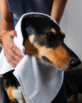 Bliska ręce suszenie psa