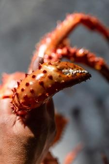 Bliska ręka trzyma kraba