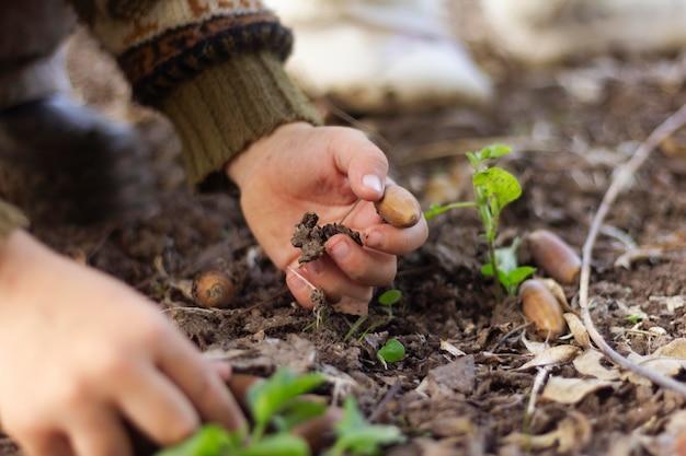 Bliska ręka zbierając żołędzie