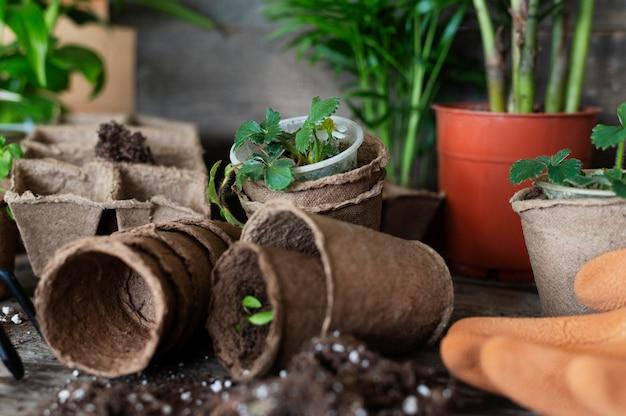 Bliska sadzonka roślin