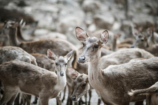 Bliska stada jeleni. koncepcja zwierząt.