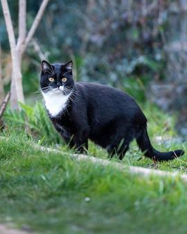 Bliska strzał czarnego kota w trawie