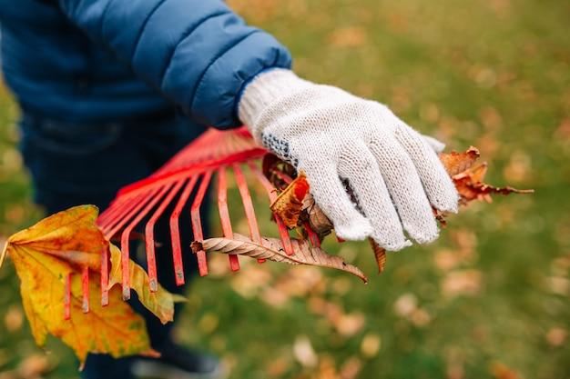 Bliska strzał mężczyzny w rękawiczce, zbierając liście z czerwonym prowizji. jesienny krajobraz. złota jesień. zimna pora roku.