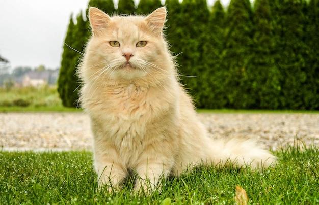 Bliska strzał puszystego słodkiego kota siedzącego na ziemi