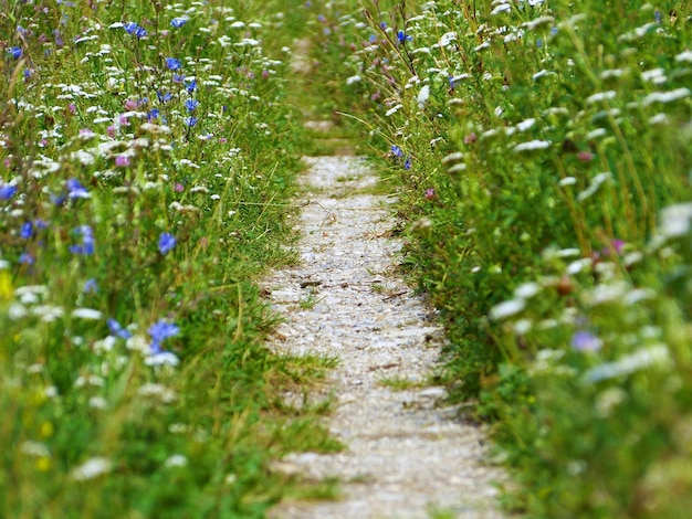 Bliska strzał wiejskiej ścieżki otoczonej magicznymi kwiatami