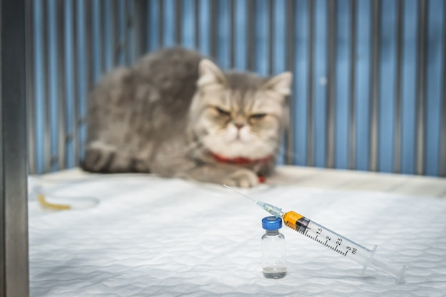 Bliska strzykawki i fiolek ze szkockim krotnie kota siedzącego w klatce