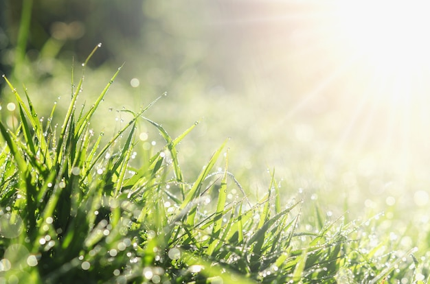 Bliska świeża wiosna zielona trawa z bokeh kropla rosy i tła światła słonecznego