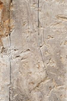 Bliska tekstura drewna