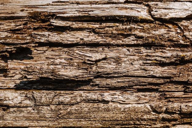 Bliska tekstury mchu kory drzewa i porostów na naturalnym drewnie.