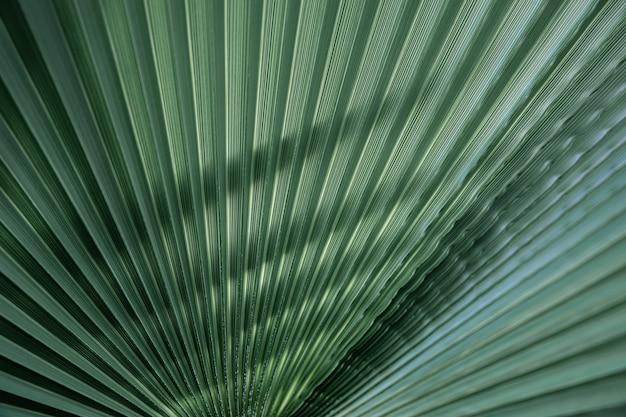 Bliska tekstury zielonych liści, proste linie. tło zielony liść palmy, pełna klatka.