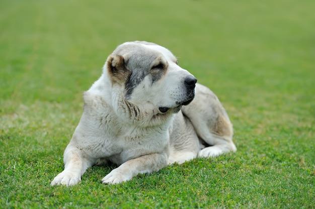 Bliska uroczego psa w letniej zielonej trawie