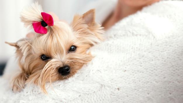 Bliska właściciel trzyma psa z kokardą