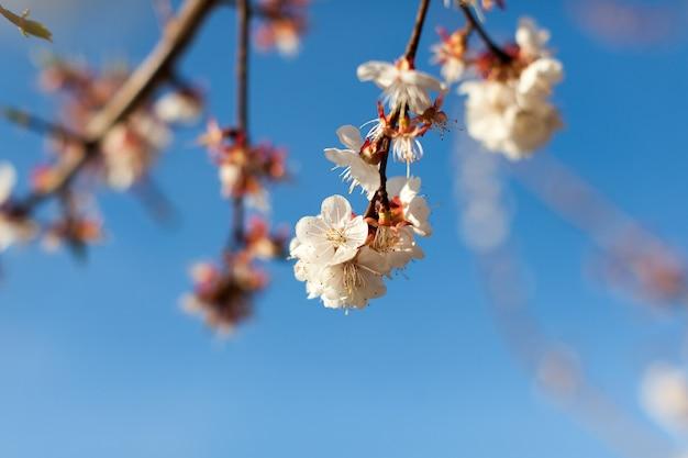 Bliska wygląd oddziałów różowe kwiaty pod czystym błękitnym niebem