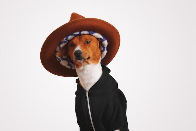 Bliski portret fantazyjnego psa basenji w czarnej bluzie z kapturem, ubrany w duży brązowy kapelusz górski z kolorową podszewką i białymi ścianami