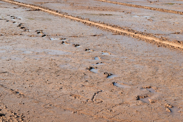 Błoto ziemi i ślad w polu ryżu przygotować ryż roślin