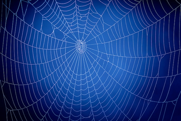 Blue spider web. koncepcja komunikacji globalnej.