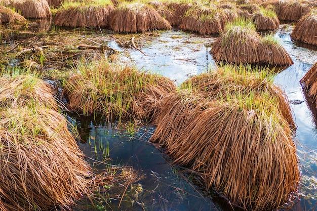 Blue wetland z brązową, puszystą, gąbczastą siatką mchu.