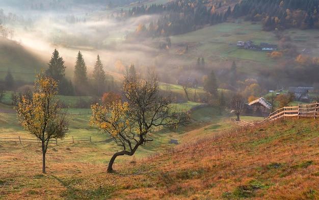 Błyszczące drzewo na zboczu wzgórza ze słonecznymi belkami w górskiej dolinie pokrytej mgłą.