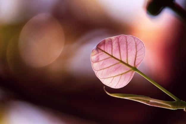 Bo liść z światłem słonecznym w ranku tle